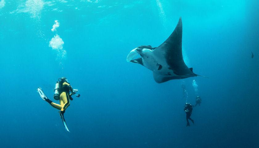 Indo Yachts Safari Photo credit-Michael Bogner